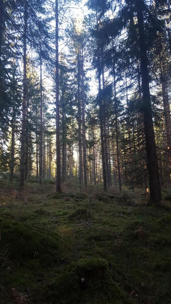 In da forest